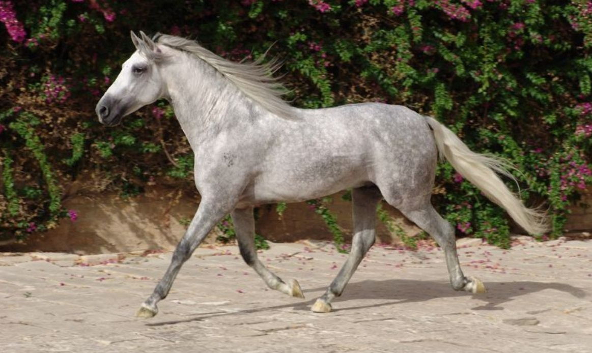 The World's Top Horse